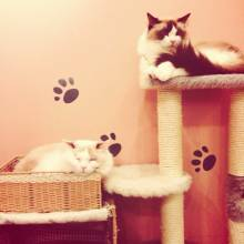 Catcafe Cateriam